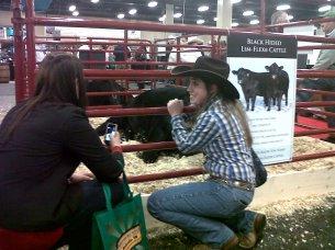 Lauren and Jesse meeting the Limousin bulls
