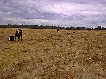 Drought has turned Arkansas pastures brown and bare