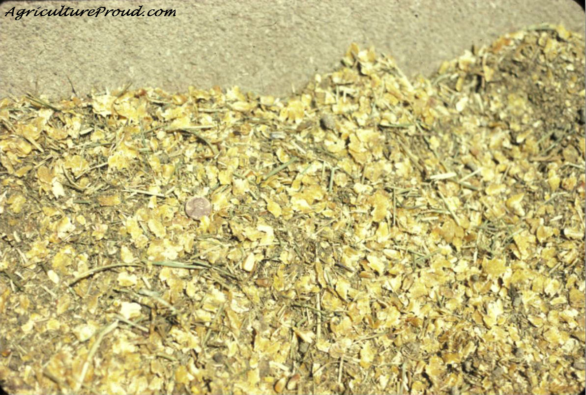 Here is a photo of cattle ration in a feedlot