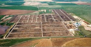 Texas cattle feedlot environment