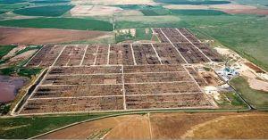 Texas cattle feedlot environment
