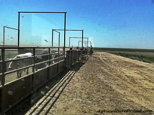 texas cattle feedlot dust CAFO environment