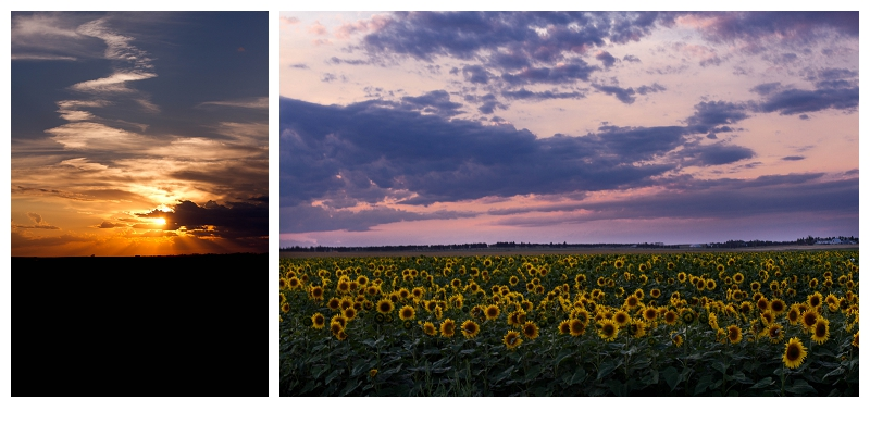 North Dakota Sunset on Sun Flowers