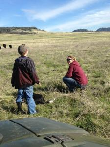 "His first time in a pasture with cattle. ""They don't stink!"" he says."