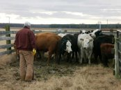 Family Cattle Farmer Ag Day