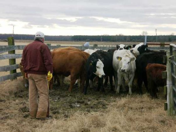Family Cattle Farmer Ag Day