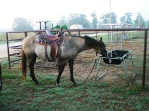 ranch horse grullo