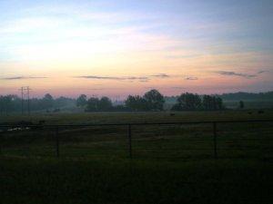 ranch sunrise cattle