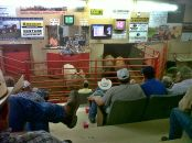 My family's cattle auction is packed most Tuesday afternoons with farmers looking to increase their herd numbers