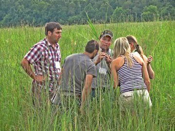 evaluating warm season forage tennessee