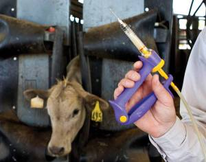 Antibiotic Use in Livestock and Resistance