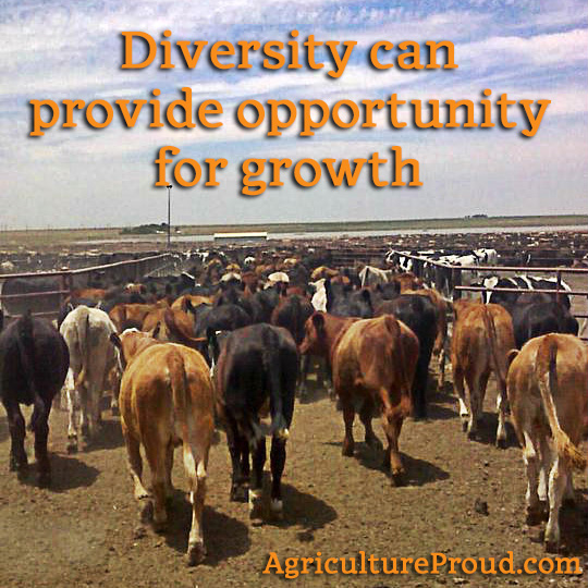 cattle feedlot diversity growth