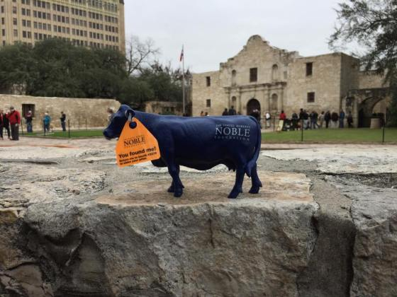 Our #bluecow remembers the #Alamo