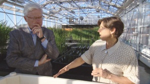 Dr. Pam Ronald, a proponent of GMO crops. CBS NEWS