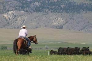 July Open Land Dillon Montana Rancher